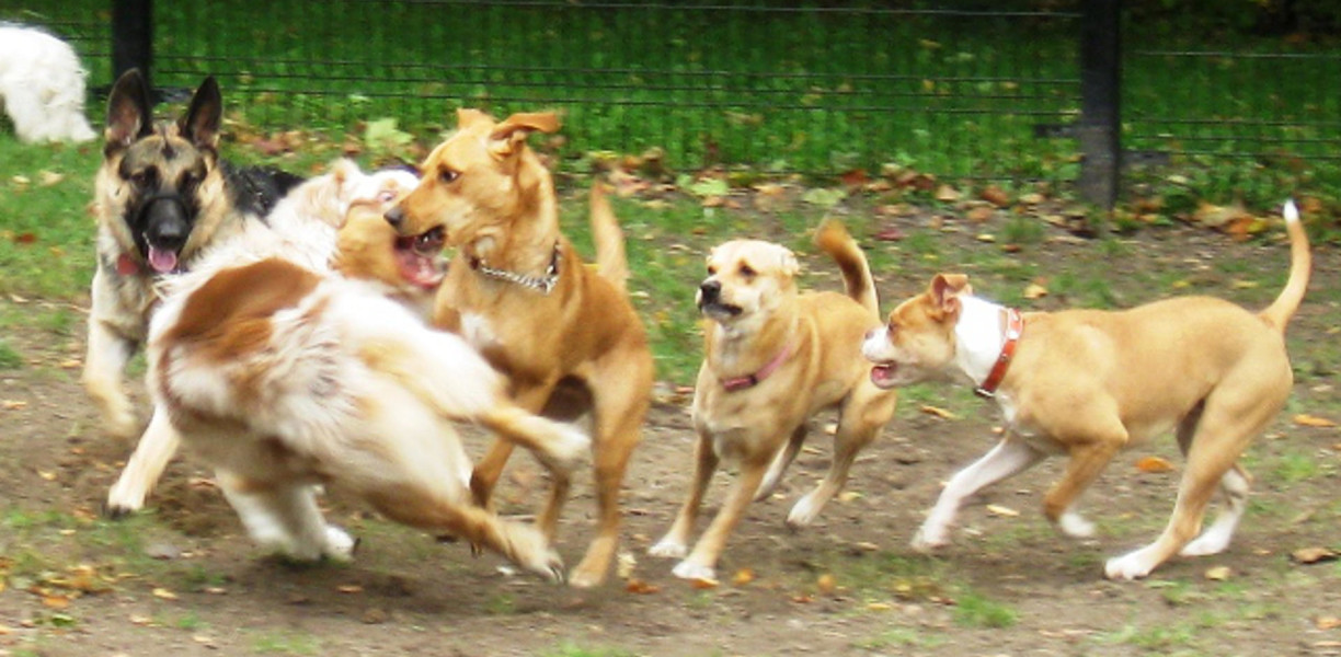PACK PLAY DURING DOG WALKING