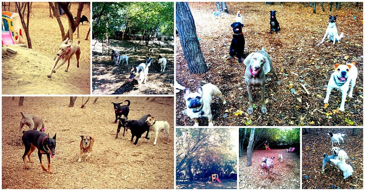 Our Private Dog Park