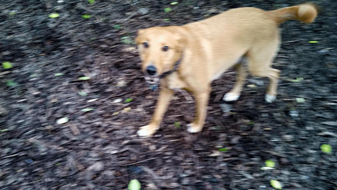 Pickles Dog Walking Daycare