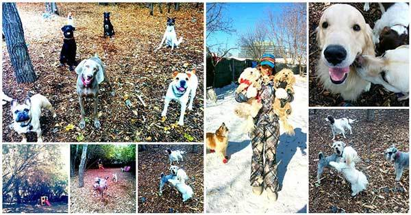 Soulmutts Toronto Dog Daycare
