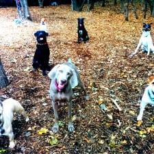 DOG RUN (26)