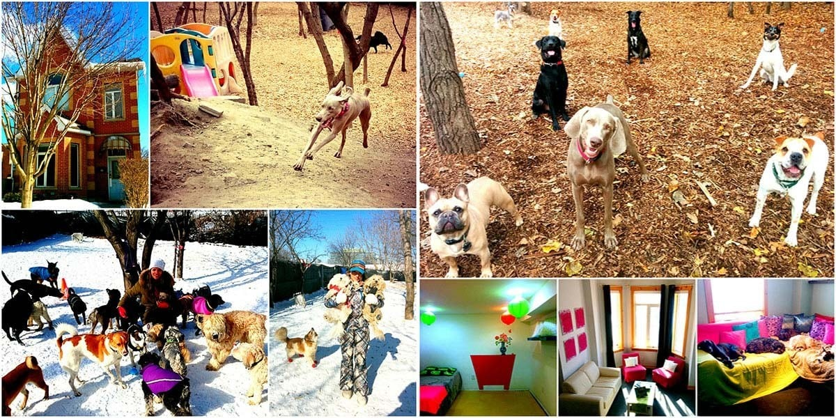 Soulmutts Toronto Dog Walking & Daycare