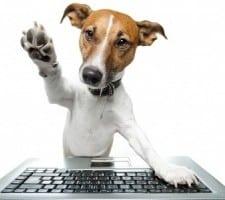dog-browsing-internet-300x200