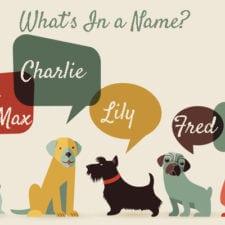 dog-name