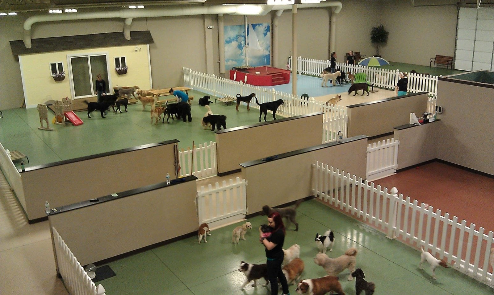 Soulmutts toronto ltd dog walking dog daycare dog boarding for Dog boarding in homes
