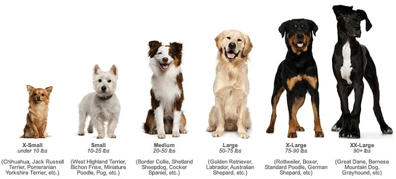 Soulmutts Toronto Ltd Dog Walking Dog Daycare Dog Boarding